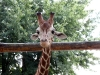 thumbs kievskij zoopark 18 Киевский зоопарк