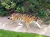 thumbs kievskij zoopark 19 Киевский зоопарк