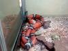 thumbs leningradskij zoopark 01 Ленинградский зоопарк