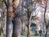 thumbs mariinskij park 16 Мариинский парк