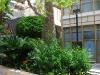 Музей Сальвадора Дали. Экзотическое дерево на улице Авенида-дель-Мар