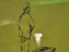 thumbs muzej snovidenij doktora frejda 05 Музей сновидений доктора Фрейда