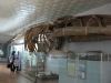 thumbs nacionalnyj nauchno prirodovedcheskij muzej nan ukrainy 10 Национальный научно природоведческий музей НАН Украины