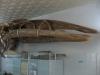 thumbs nacionalnyj nauchno prirodovedcheskij muzej nan ukrainy 11 Национальный научно природоведческий музей НАН Украины