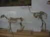 thumbs nacionalnyj nauchno prirodovedcheskij muzej nan ukrainy 15 Национальный научно природоведческий музей НАН Украины