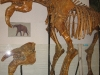 thumbs nacionalnyj nauchno prirodovedcheskij muzej nan ukrainy 16 Национальный научно природоведческий музей НАН Украины