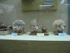 thumbs nacionalnyj nauchno prirodovedcheskij muzej nan ukrainy 20 Национальный научно природоведческий музей НАН Украины