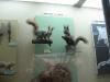 thumbs nacionalnyj nauchno prirodovedcheskij muzej nan ukrainy 21 Национальный научно природоведческий музей НАН Украины