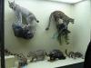 thumbs nacionalnyj nauchno prirodovedcheskij muzej nan ukrainy 26 Национальный научно природоведческий музей НАН Украины
