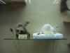 thumbs nacionalnyj nauchno prirodovedcheskij muzej nan ukrainy 28 Национальный научно природоведческий музей НАН Украины