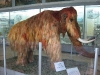 thumbs nacionalnyj nauchno prirodovedcheskij muzej nan ukrainy 35 Национальный научно природоведческий музей НАН Украины