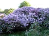 thumbs nacionalnyj botanicheskij sad imeni n n grishko 02 Национальный ботанический сад имени Н.Н. Гришко