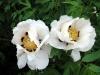 thumbs nacionalnyj botanicheskij sad imeni n n grishko 05 Национальный ботанический сад имени Н.Н. Гришко