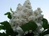 thumbs nacionalnyj botanicheskij sad imeni n n grishko 20 Национальный ботанический сад имени Н.Н. Гришко