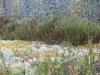 Озеро Сандал. Лишайники