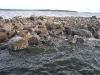 Озеро Сандал. Скалы в воде