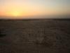thumbs palmira 05 Пальмира