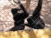 thumbs park obezjan 09 Парк Обезьян (Monkey Park)
