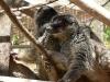 thumbs park obezjan 30 Парк Обезьян (Monkey Park)