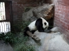 thumbs pekinskij zoopark 01 Пекинский зоопарк