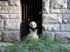 thumbs pekinskij zoopark 03 Пекинский зоопарк