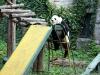 thumbs pekinskij zoopark 06 Пекинский зоопарк