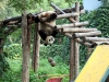 thumbs pekinskij zoopark 07 Пекинский зоопарк