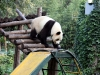 thumbs pekinskij zoopark 08 Пекинский зоопарк
