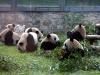 thumbs pekinskij zoopark 10 Пекинский зоопарк