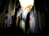 Пещера Новоозерная. Растущий сталактит