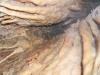 thumbs peshhery krubera i novoozernaya 13 Пещеры Крубера и Новоозерная
