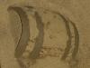 thumbs petropavlovskij plyazh 13 Песчаные скульптуры на Петропавловском пляже