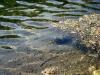 Радоновые озера. Прозрачность воды