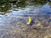 thumbs radonovye ozera 14 Радоновые озера