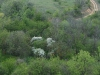 thumbs regionalnyj landshaftnyj park granitno stepnoe pobuzhe 15 Региональный ландшафтный парк Гранитно Степное Побужье