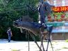 thumbs skulptury omsk 01 Омск. Городские скульптуры