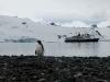 Южные Шетландские острова. Остров Кинг-Джорджа