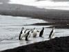 thumbs south shetland islands 17 Южные Шетландские острова