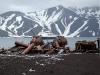 Южные Шетландские острова. Остров Десепшен