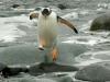 Южные Шетландские острова. Остров Гринвич