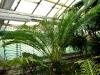 Тропический маршрут Ботанического сада имени В.Л. Комарова. Оранжерея папоротников