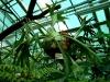 thumbs tropicheskij marshrut 02 Ботанический сад имени В.Л. Комарова
