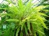 thumbs tropicheskij marshrut 03 Ботанический сад имени В.Л. Комарова