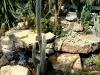 thumbs tropicheskij marshrut 08 Ботанический сад имени В.Л. Комарова