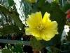 thumbs tropicheskij marshrut 09 Ботанический сад имени В.Л. Комарова