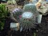 thumbs tropicheskij marshrut 10 Ботанический сад имени В.Л. Комарова