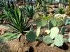 Тропический маршрут Ботанического сада имени В.Л. Комарова. Растения пустынь Южной Африки и Мексики