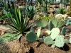 thumbs tropicheskij marshrut 13 Ботанический сад имени В.Л. Комарова