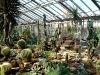 thumbs tropicheskij marshrut 15 Ботанический сад имени В.Л. Комарова