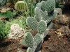 thumbs tropicheskij marshrut 16 Ботанический сад имени В.Л. Комарова